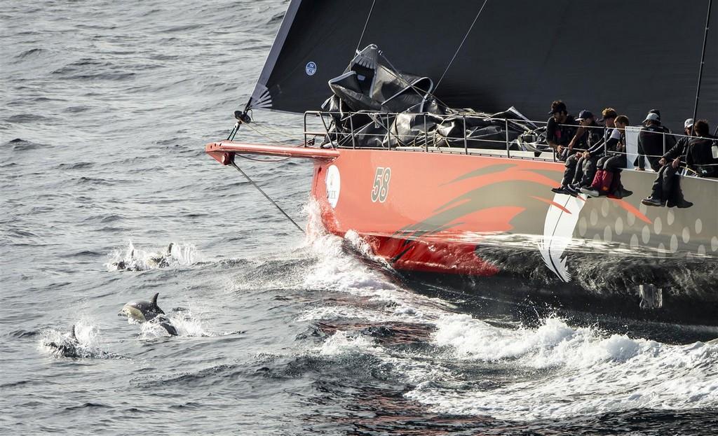 Sydney Hobart Race 2015 arrivi 02