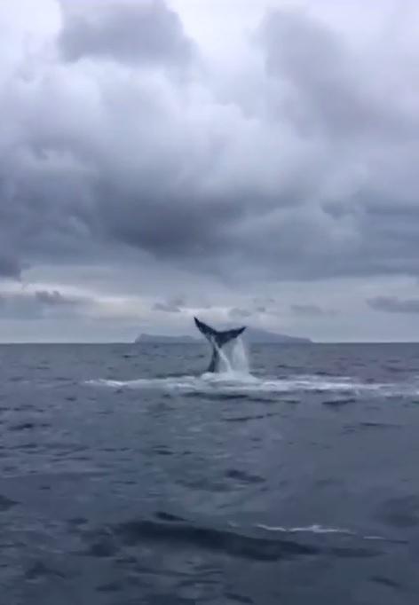 Balena invernale napoli 2019